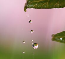 Droplets Down The Line by Amy Dee