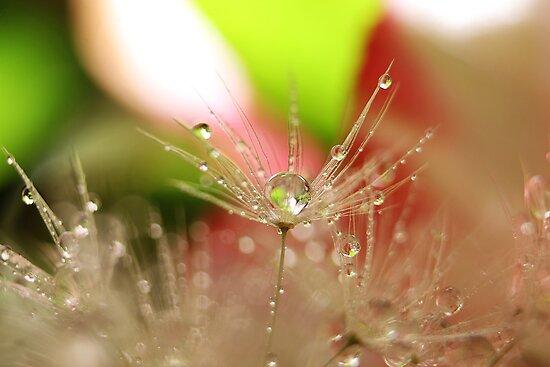 Joy Drops by Amy Dee