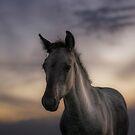 Excuse me, do you speak equus? by Henri Ton