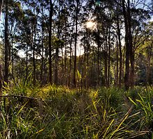 Tall gums - Trevallyn Nature Recreation Area  launceston by Ben Swanson