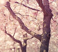 Spring is here by mariakallin