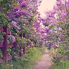 Walking among lilacs by mariakallin