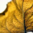Leaf Detail by SquarePeg