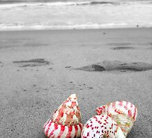 Colourful shells on an empty beach by saraotter