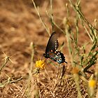 Beautiful Butterfly by Maurine Huang