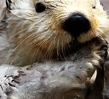 Otterrific! by Micci Shannon