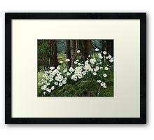 Sheltering daisies. Framed Print