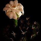 Prickles And Enigmatical White Flower by Atılım GÜLŞEN
