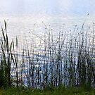Shoreline by Gayle Dolinger