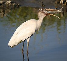 Wood Stork with a HUGE Fish by Paulette1021
