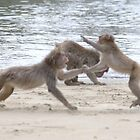 Monkeys Fighting on Kojima Island  by Sunny Shaffner