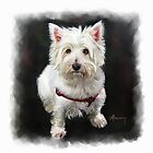 West Highland White Terrier Pet Portrait by Michael Greenaway