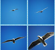 Seagull In flight Collage by Jonice