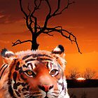 African Tiger wildlife Portrait by Michael Greenaway