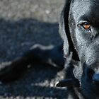 Black Dog by Michael Townsend