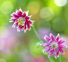 Shining Bonnets by Sarah-fiona Helme