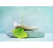 driftwood, stone and a gingko leaf Photographic Print