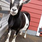 Humbled Billy Goat by Barberelli