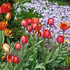 Spring Flowers of Many Colours by Gerda Grice