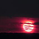 Sun on its beat by cmehta82