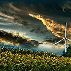 Sunfllower field II by LudaNayvelt