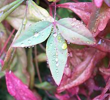 Colorful Leaf by anishell