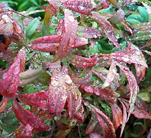 Morning Dew on Colorful Leaves by anishell