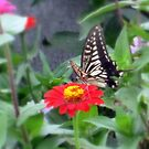 Butterfly on a lazy summer day in Miyakonojo  by Sunny Shaffner