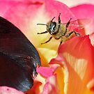 Black Feather, Angry Bee by Kenneth Haley