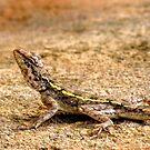 Lizard by Shiju Sugunan