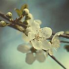 Winter Blossom by Bronwyn Munro