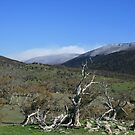 Thredbo, From Jindabyne by RubyFox