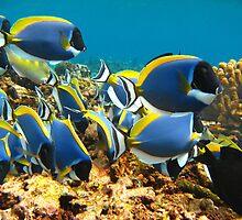 Seychelles - Underwater by Marieseyes