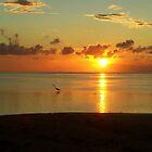 sunset heron by tamarama