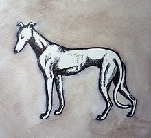 Greyhound by Polecatty