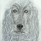 Maya the Spaniel by Pieta Pieterse
