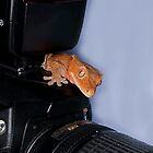 Crested Gecko on camera by Sean Cameron