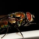 Fly on dark bgd by vasu