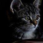 Cat Contemplation by Nicki Baker
