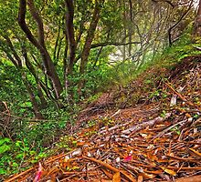 Tilden State Park, Berkeley California by lagumen