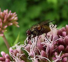 Fly by SophiaDeLuna