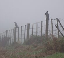 birds on the wire in the rain by gaylene