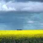 Rain over the Canola by Julie Sleeman