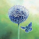 Echinops and Common Blue Butterfly by Helen Lush