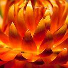 Flower by D Byrne