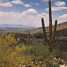 Desert Scene - Saguaro by Richard G Witham