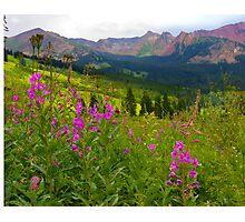 Fireweed Abundance Photographic Print