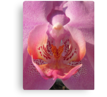 Secrets of an orchid Canvas Print