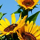 Garden Sunflowers by Carolyn Chentnik