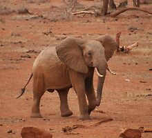 Young Elephant - Tsavo East, Kenya by Neil Grainger